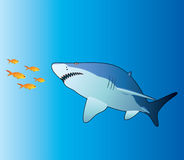 Shark and tropical fishes Stock Photos