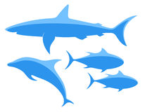 Shark. Tuna. Dolphin. Isolated objects on white background. Vector illustration (EPS 10 Royalty Free Stock Photography