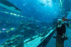 Shark tunnel Dubai Aquarium Stock Photos