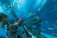Shark tunnel Dubai Aquarium Stock Photography