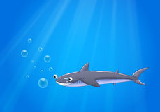 A shark under the sea Royalty Free Stock Images