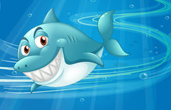 A shark under the sea Stock Photo