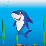 Shark underwater - illustration of children Royalty Free Stock Images