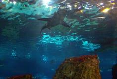 Shark  Stock Photography