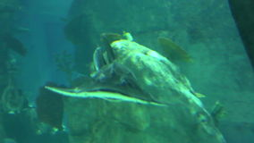 Shark in underwater wild life stock video