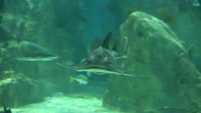 Shark in underwater wild life stock footage