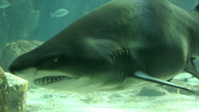 Shark in underwater wild life stock footage