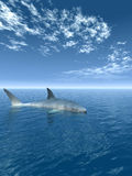 Shark_V Royalty Free Stock Photography