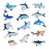 Shark vector cartoon seafish with sharp teeth in jaw illustration set of attacking fishery character in ocean isolated. On white background vector illustration
