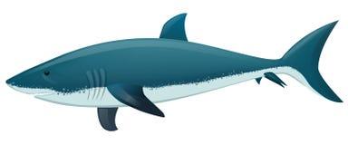 Shark. Vector illustration of a Shark Stock Photos
