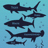 Shark vector silhouettes set. Sea fish, animal swimming, fauna illustration. Stock Photography