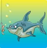 Shark vs worm Royalty Free Stock Photo