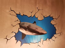 Shark through a wall. Interesting decoration in department store toilet Stock Image