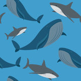 Shark and whale seamless pattern Stock Photography