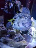 Sharkbait rafy akwarium - Alton Góruje Zdjęcia Royalty Free