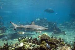 Sharkk Royalty Free Stock Photos