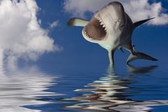 SharkLeap. Approaching Great White Shark, known as a white pointer shark Royalty Free Stock Images