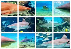 Sharks. Shark montage Stock Images