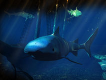 Sharks. Three sharks swimming near the wreck of a boat Stock Image