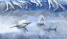 Sharks Stock Image