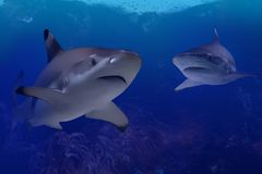 Sharks Stock Photography