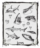 Sharks. Large hand-drawn and precise series - Sharks Royalty Free Stock Photo