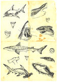 Sharks. Large hand-drawn and precise series - sharks. The old paper Stock Images
