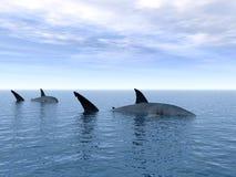 Sharks Stock Photos