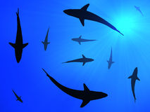 Sharks background. Sharks silhouettes against sunlight and blue background Stock Photos