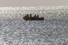 Sharks Board SkiBoat Ocean Stock Image