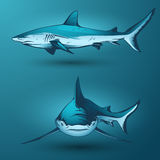 Sharks. Color sharks illustration in vector Stock Images