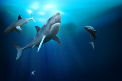 Sharks. 3D illustration. Stock Image