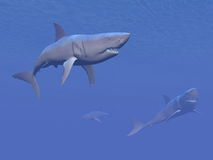 Sharks - 3D render Royalty Free Stock Photo