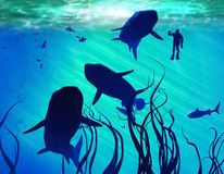 Sharks and diver Royalty Free Stock Image
