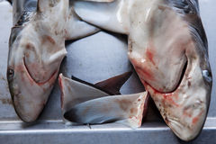 Sharks at fish market Royalty Free Stock Photography
