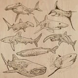 Sharks - An hand drawn  pack Stock Photo