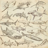 Sharks - An hand drawn pack. Freehand sketching, originals. Animals, SHARKS, Chordata. Collection of an hand drawn illustrations. Description, Full sized hand Royalty Free Stock Images