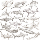 Sharks - An hand drawn pack. Freehand sketching, originals. Animals, SHARKS, Chordata. Collection of an hand drawn illustrations. Description, Full sized hand Royalty Free Stock Photos