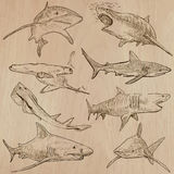 Sharks - An hand drawn vector pack. Animals - SHARKS, Chordata. Description - Hand drawn vectors, freehand sketching. Editable in layers and groups. Colored Stock Photos