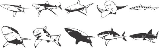 Sharks icons. Collection of various sharks illustrations on white background Stock Photos