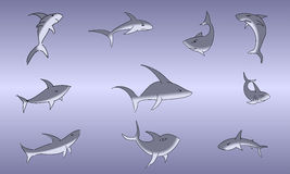 Sharks with lines Stock Images