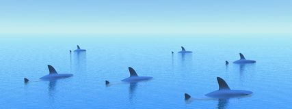 Sharks by morning light Stock Photography