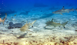 Sharks over a coral reef at ocean stock image