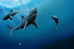Sharks in the sea. 3D illustration Royalty Free Stock Images