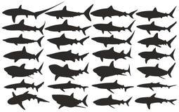 Sharks. Stock Photography