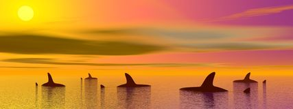 Sharks by sunset Royalty Free Stock Images