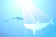 Sharks swimming in the ocean background Royalty Free Stock Image