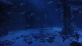 Sharks swimming underwater among other fishes species inside fish tank aquarium trip concept -. Sharks swimming underwater among other fishes species inside fish stock video footage