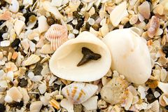 Sharks Tooth Royalty Free Stock Photo
