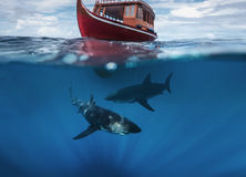 Sharks Under Boat in the ocean. Great White Shark in blue ocean. Underwater photography. Predator hunting near water surface royalty free stock image